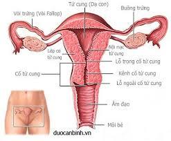 Chẩn đoán lạc niêm mạc tử cung