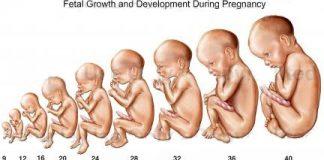 Chỉ số phát triển của thai nhi qua tùng giai đoạn