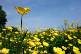 Những loại hoa có thể gây sẩy thai
