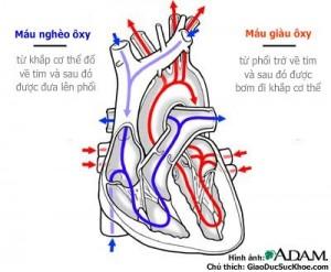 chuan doan som benh tim mach 300x247 Phương pháp chuẩn đoán sớm bệnh tim mạch hiện nay