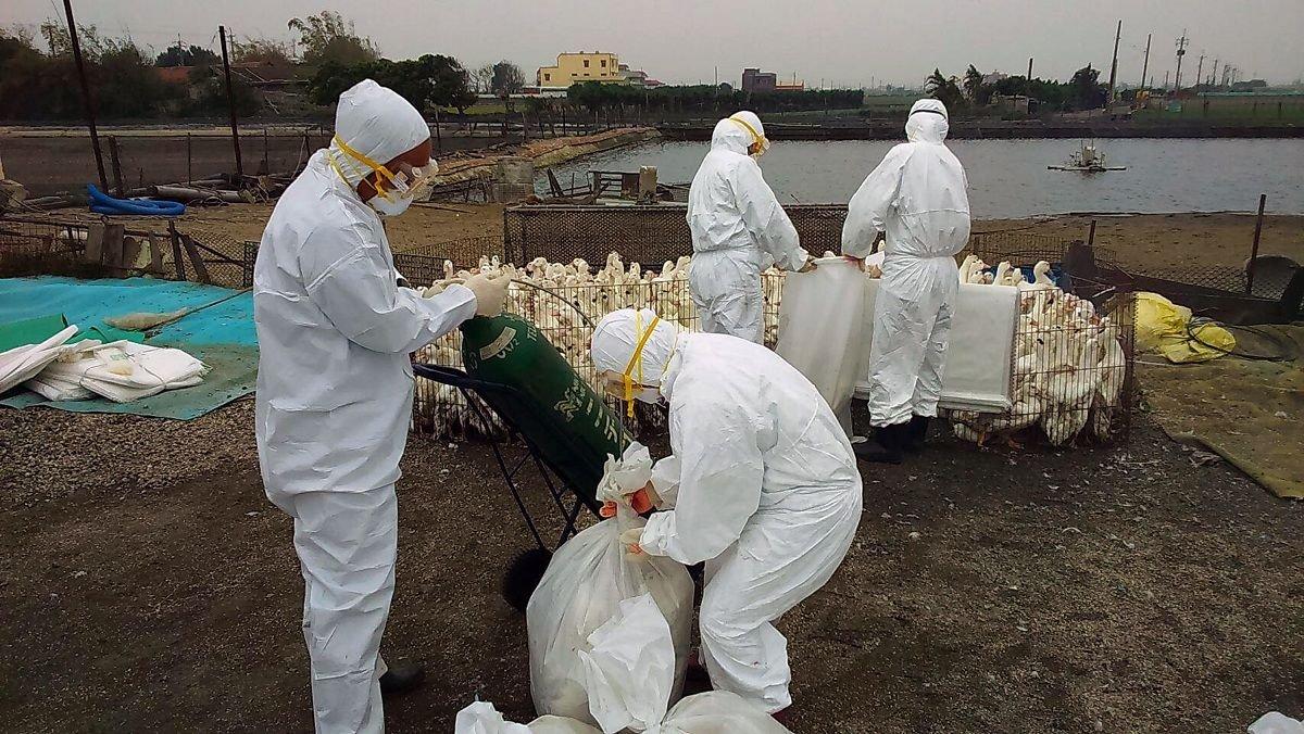 H5N1-Avian-Flu-1.jpg