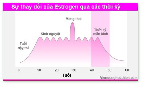 Sơ đồ sự thay đổi của Estrogen