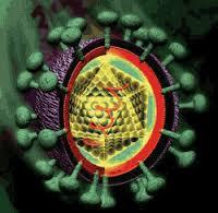 virus HCV