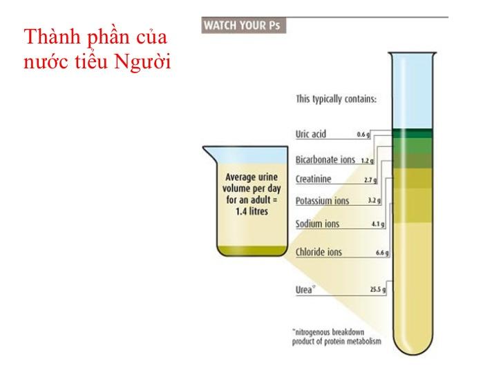 Các thành phần hóa học trong nước tiểu
