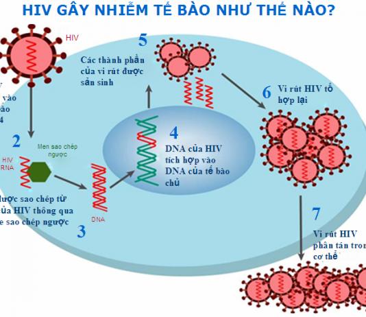 phong-tranh-lay-nhiem-hiv