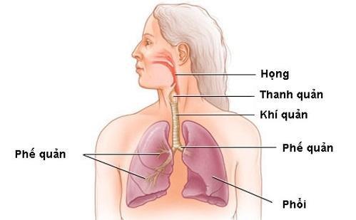 Rối loạn chức năng họng và thanh quản