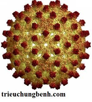 viem ganB Bệnh viêm siêu vi  gan B ( kì 1)